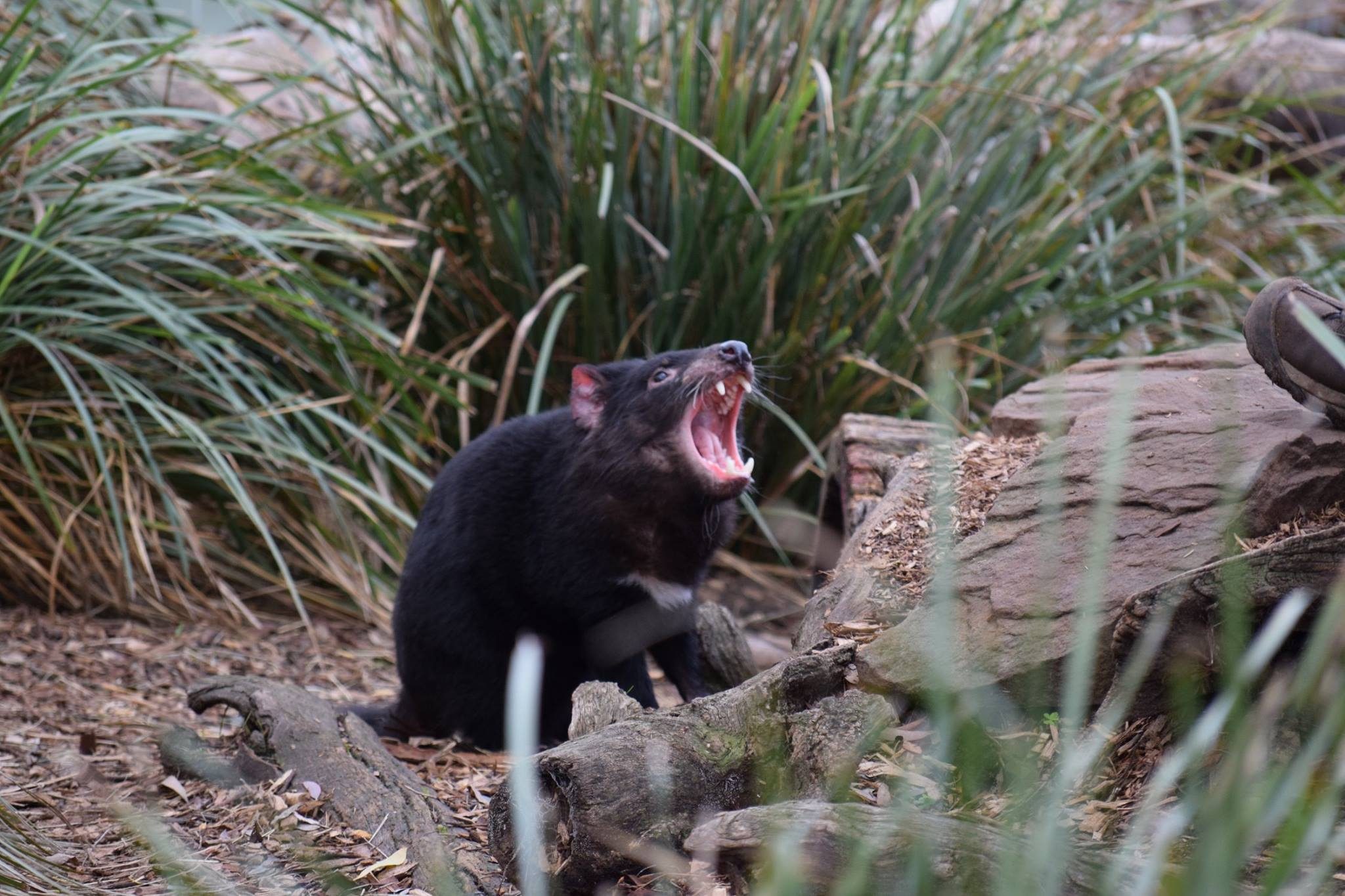 We Tassie Devils approve of Salesforce spreading its wings here!